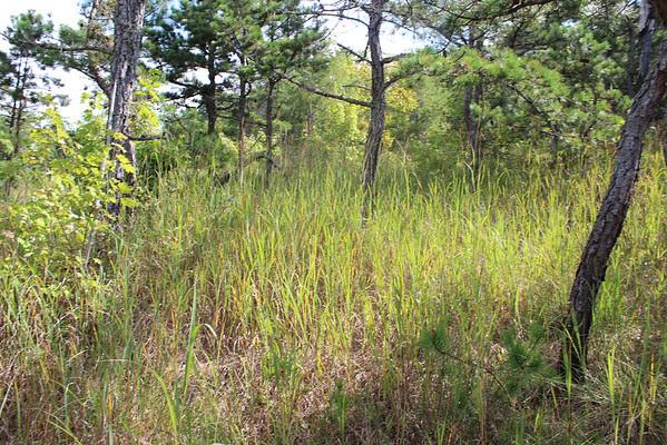 http://cumberlandgal.smugmug.com/Hiking/wilderness/Buck-Creek-Serpentine-Barrens/i-zh427Kf/0/M/Buck%20Creek%20086-M.jpg