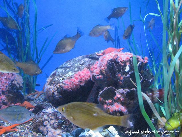 Denver Aquarium 10