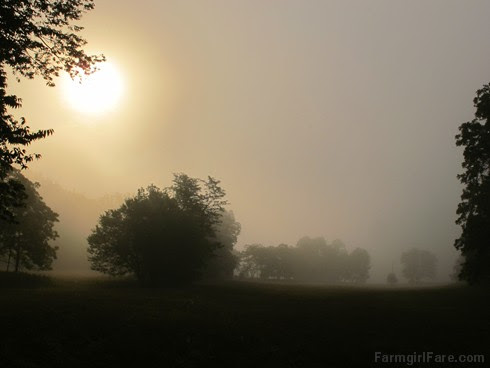 Misty farm morning (1) - FarmgirlFare.com