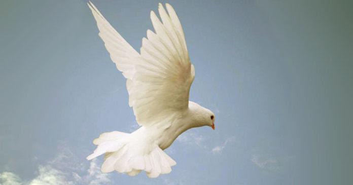 Unduh 102+  Gambar Burung Merpati Dan Alkitab HD Paling Bagus