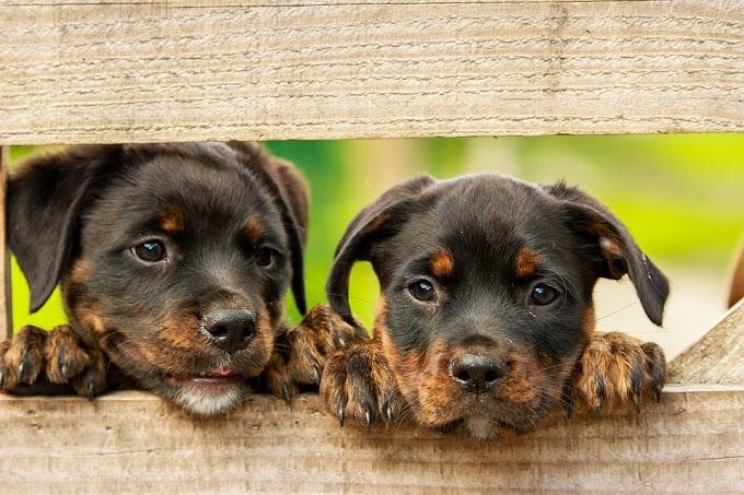Consejos para darle vitaminas de manera correcta a un perro