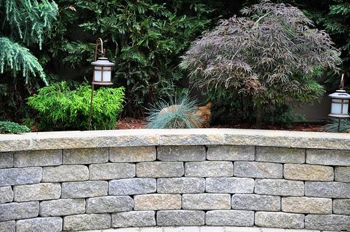 KittyCamoflage