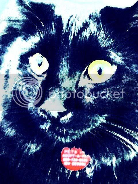 black cat,photoshop