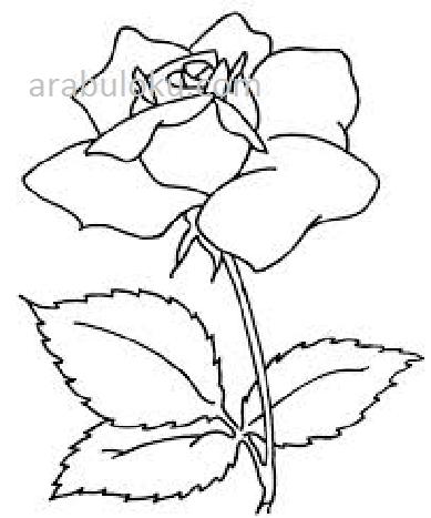 çiçekler Boyama Sayfaları Sayfa 3 8 Arabulokucom
