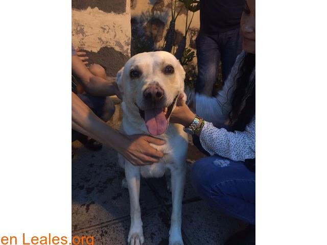 Perros encontrados » España » Las Palmas - Gran Canaria » GRAN CANARIA