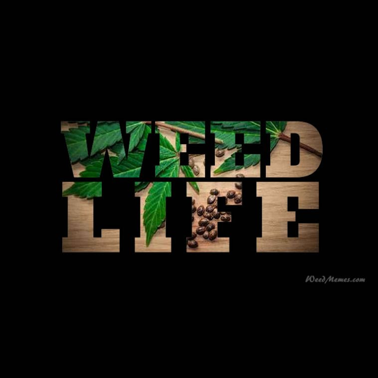 Weed Life Stoner Quotes Weed Memes