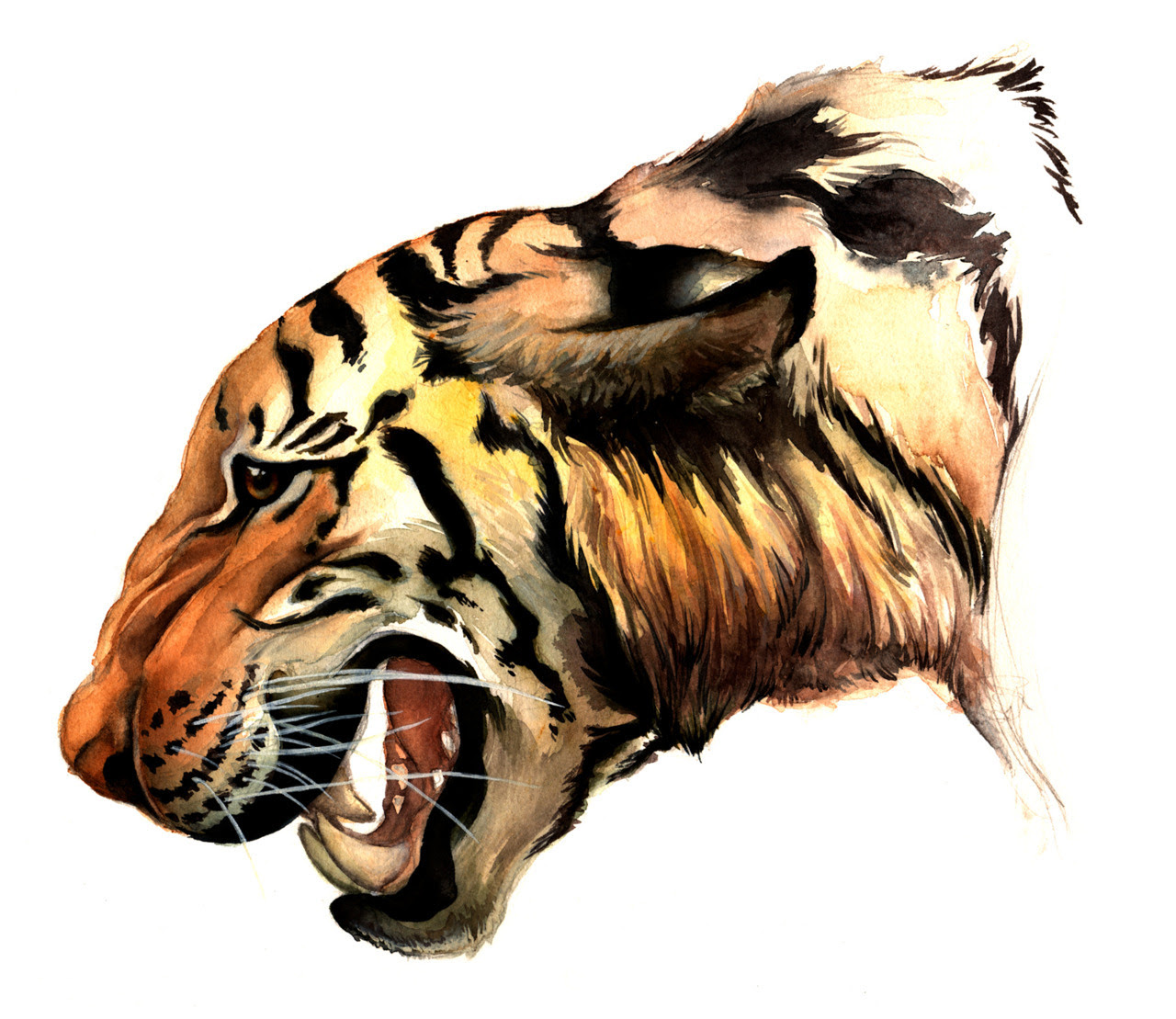 Bengal Tiger, watercolor 2012 Buy a Print