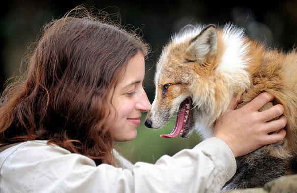 rescued-tame-pet-fox-cub-todd-emma-dsylva-3