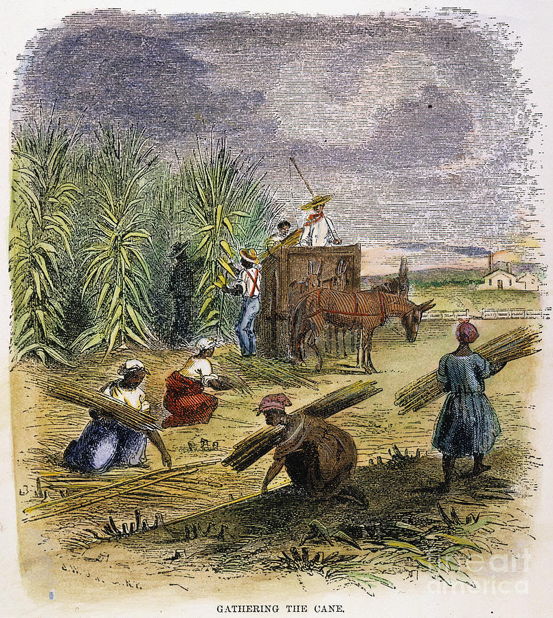 http://images.fineartamerica.com/images-medium-large/slaves-gathering-sugar-cane-granger.jpg