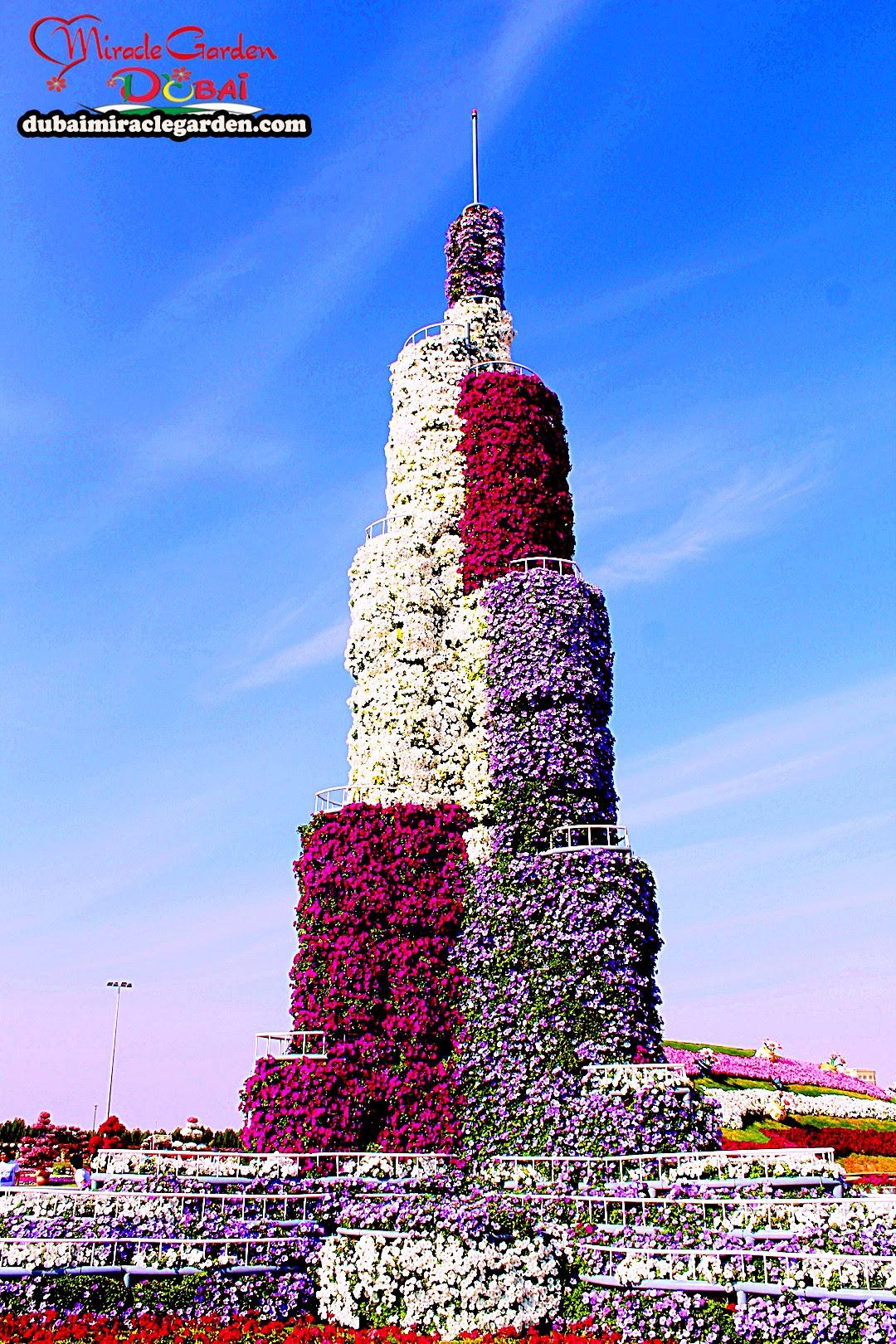 Dubai Miracle Garden 14