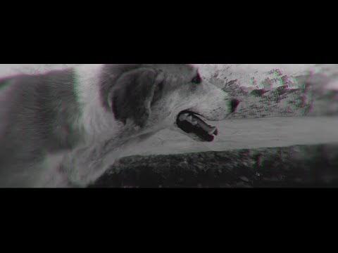 Nanpa Básico presenta; Vida de Perro (Video) | 2016 | Colombia