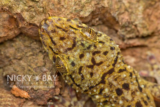 Gecko - DSC_5086