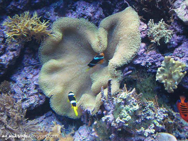 Denver Aquarium 3