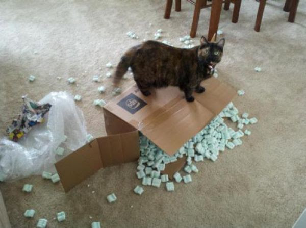 Cats Can Be Evil