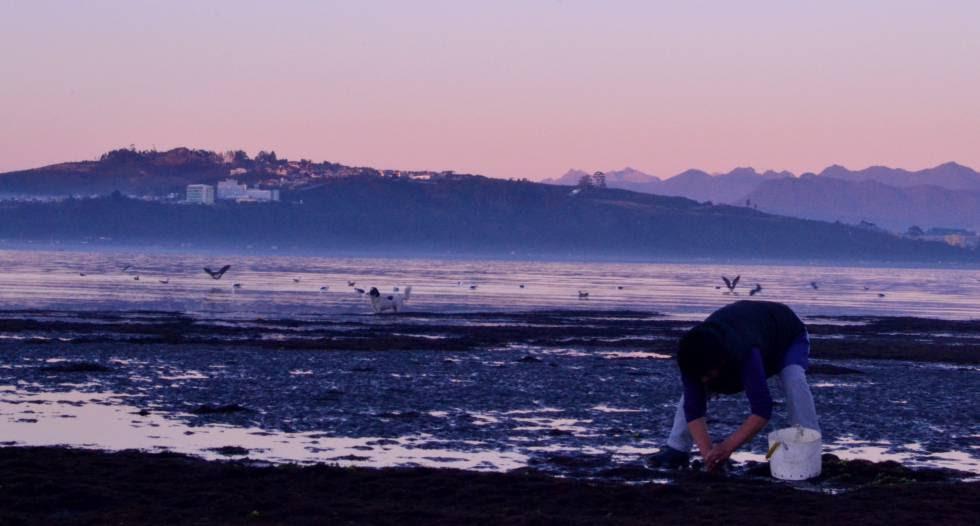 Una mujer recoge navajas en Puntilla Tenglo (Chile).