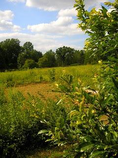 Willow Wood Arboretum! 3