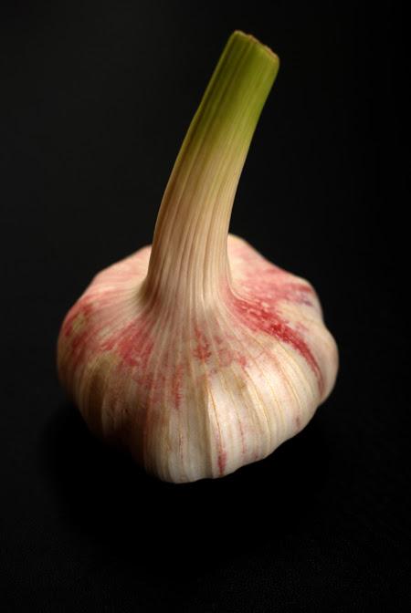 garlic© by Haalo