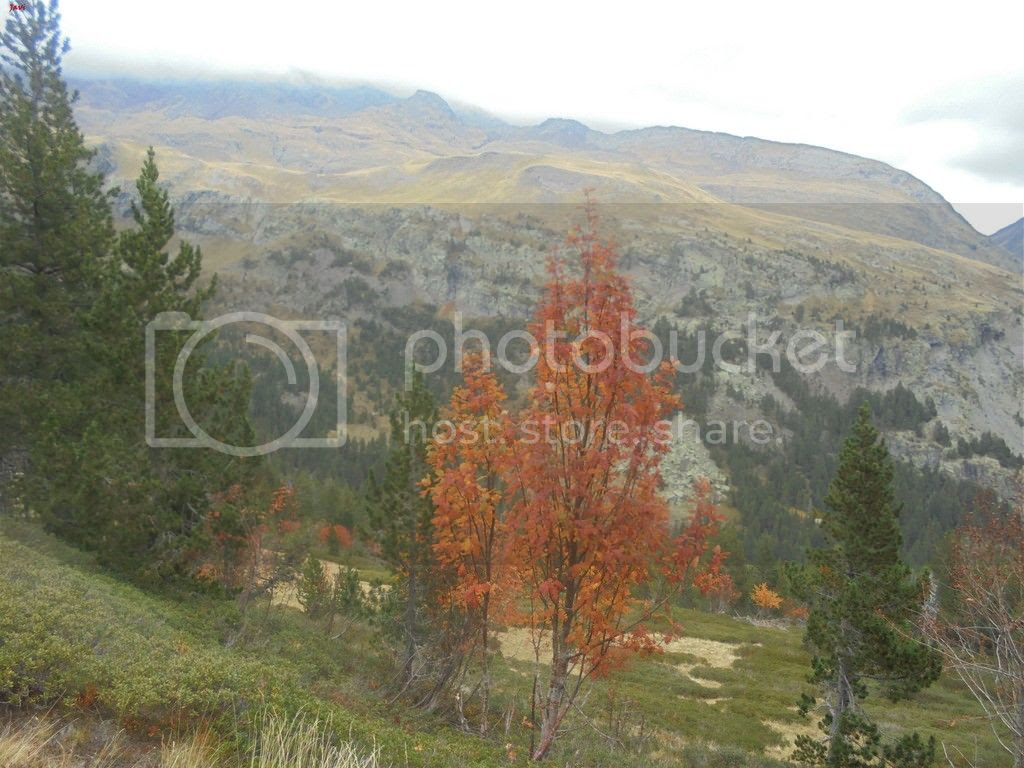 photo BACHIMALA - CULFREDAS 11-10-15 170_zpsjtbq1rp8.jpg