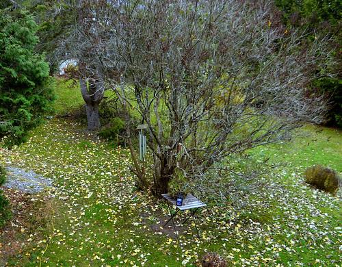 November Garden