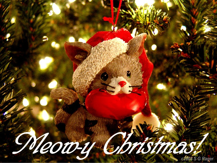 Cute Merry Christmas Wallpaper Cats Best Cars Wallpapers