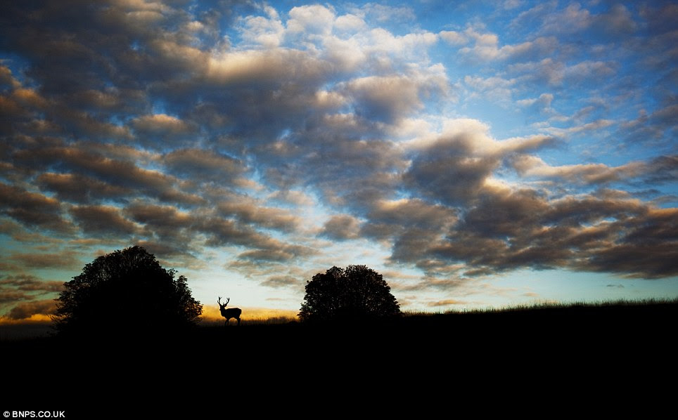 Lone stag at sunset: Photographed by Alex Saberi