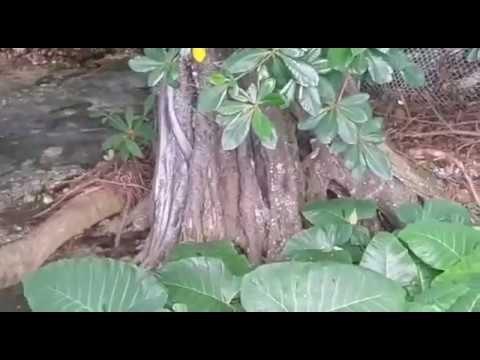Fluente Natural del Rio Los Patos, Barahona, RD