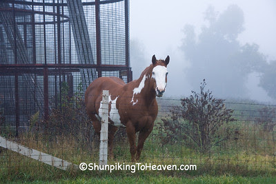 Horse in the Early Morning Fog, Adams County, Wisconsin