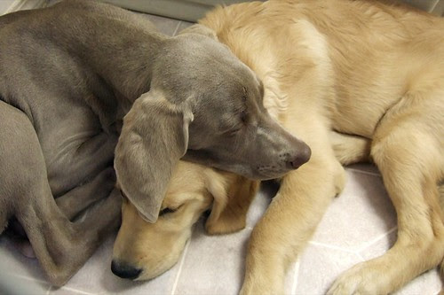 Friends Napping Too by Back in the Pack