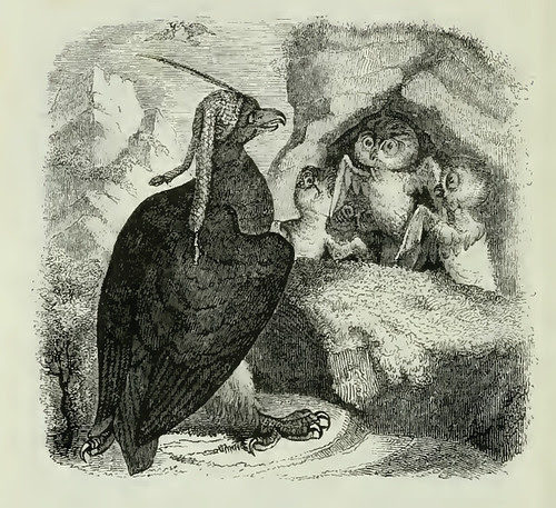 Aquila et Noctua