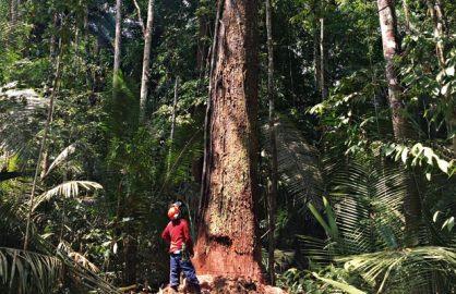 Mata fechada: o CEO da empresa suíça Precious Woods, Markus Brütsch (na foto ao lado), faz a gestão de 500 mil hectares de florestas, dos quais 300 mil estão regularizados. Na área há 70 espécies que podem ser colhidas, entre elas o ipê e o jatobá