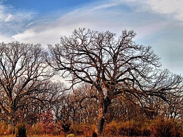 Old Oak HDR 20121118