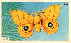 papillon 016