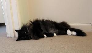 floor-roll-cat1