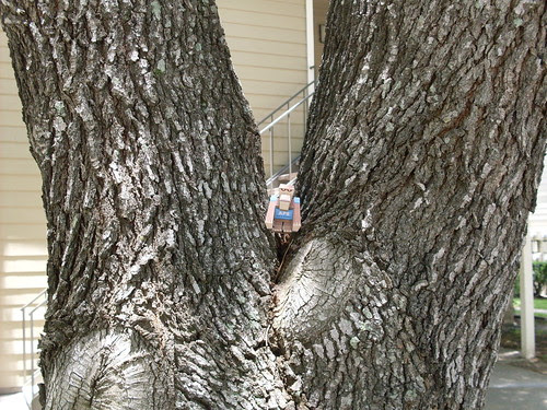 ptsf julian 03 - my tree