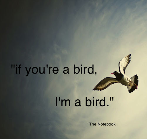 Beautiful Birds Quotations And Sayings Parryzcom