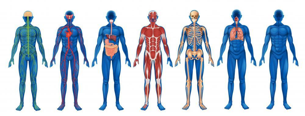 Resultado de imagen para interdependent body systems
