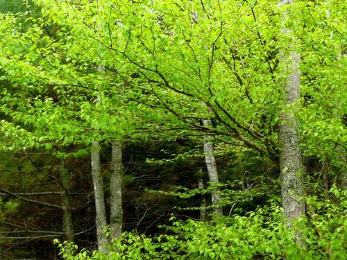 Spring Green (III) by RV Bob