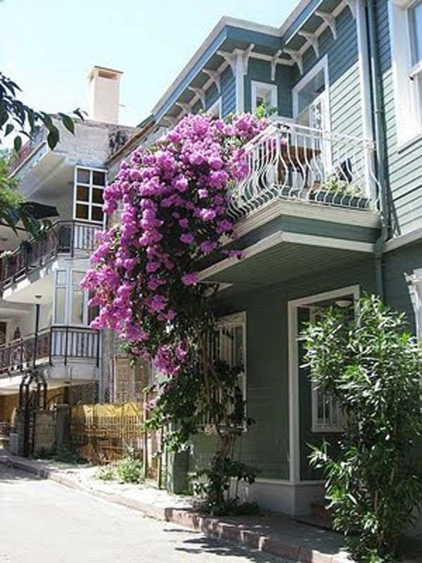 AD-Spectacular-Balcony-Garden-9