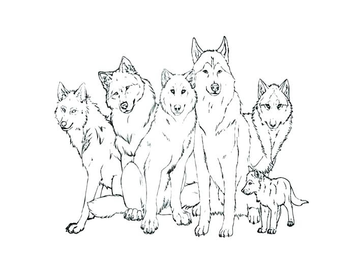 Detailed Wolf Coloring Pages at GetColorings.com | Free ...