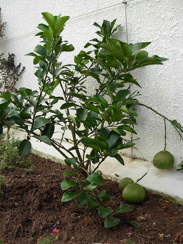 Kampong plants (4)