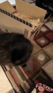 Jasper in his new favorite box