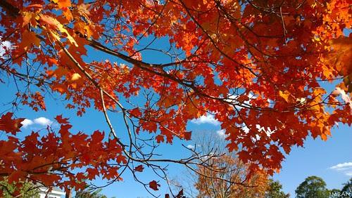 Look Up, Fall (Coming) Down! - IMRAN™ - (SOOC) by ImranAnwar