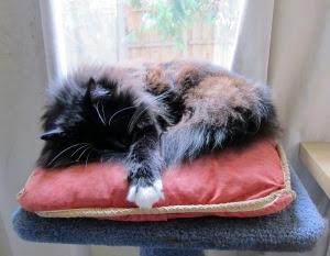 cushion-sleep-1
