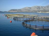 Τρεις νέες Προσκλήσεις στον Τομέα της Αλιείας - Οι λεπτομέρειες
