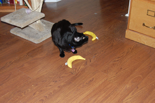 I Can Has Max's Banana?