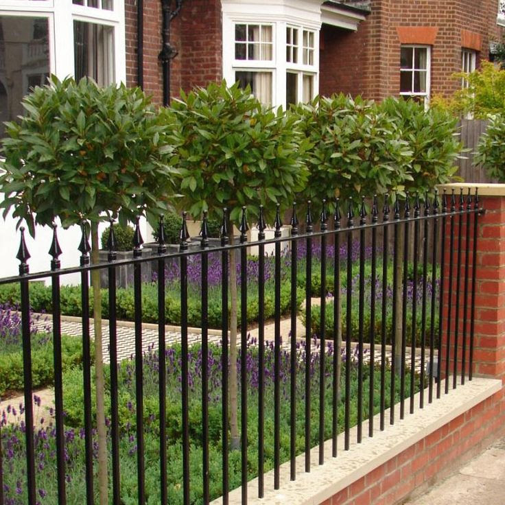 Small Front Garden with buxus boxwood box hedges lavender railings