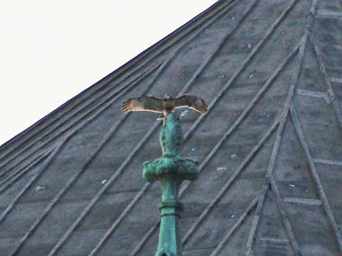 Fledgling on Finial