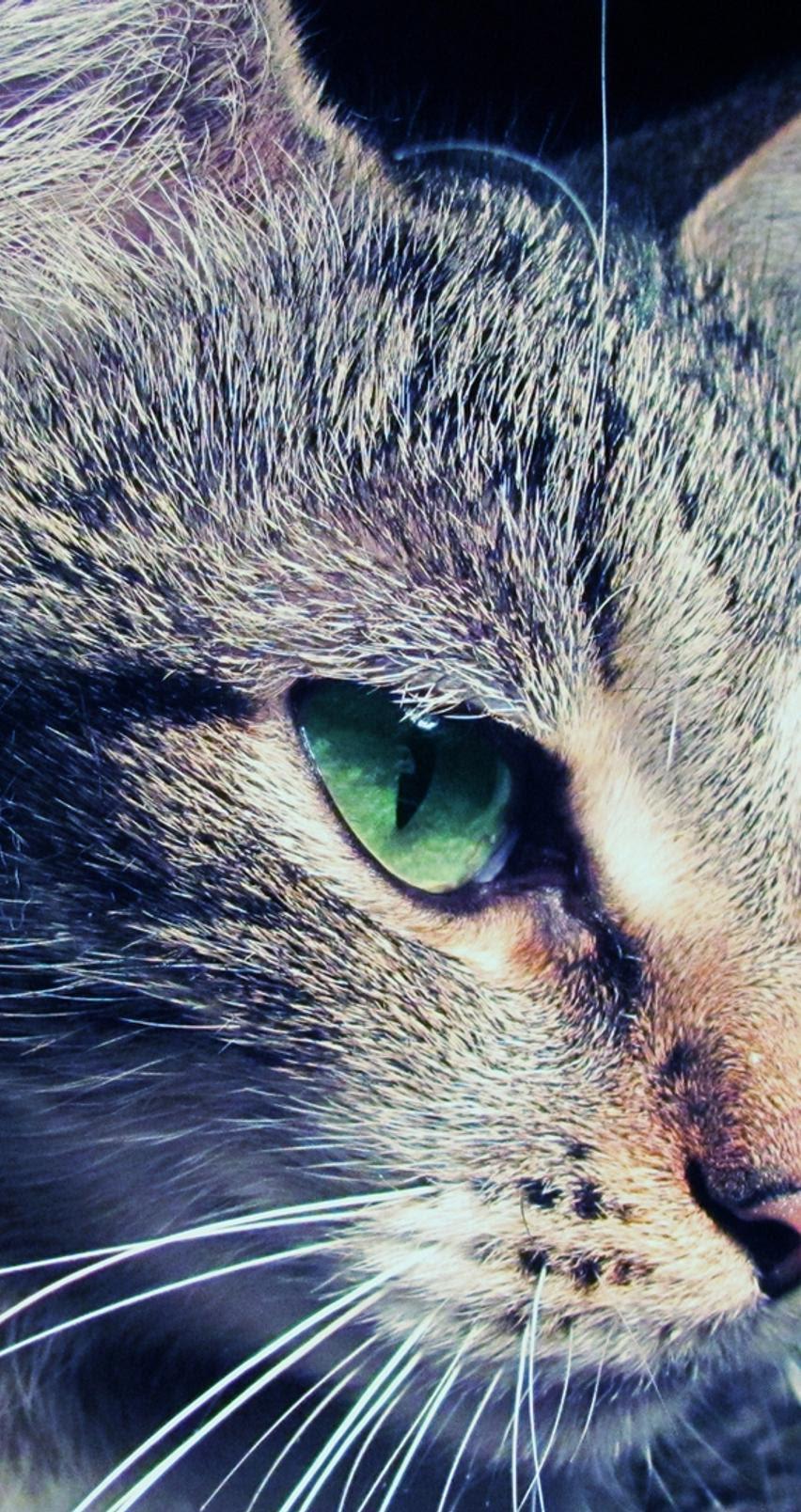 Green Cat Hd Wallpaper