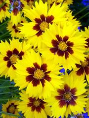 Flowers_610
