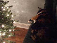 Christmas Hallie